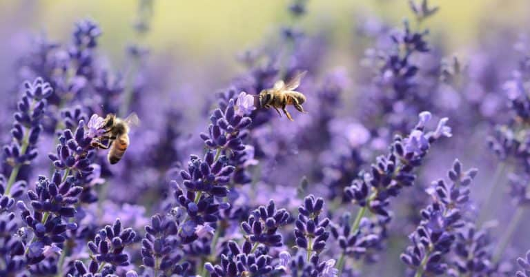 How to Treat Bee Stings in Kids Correctly